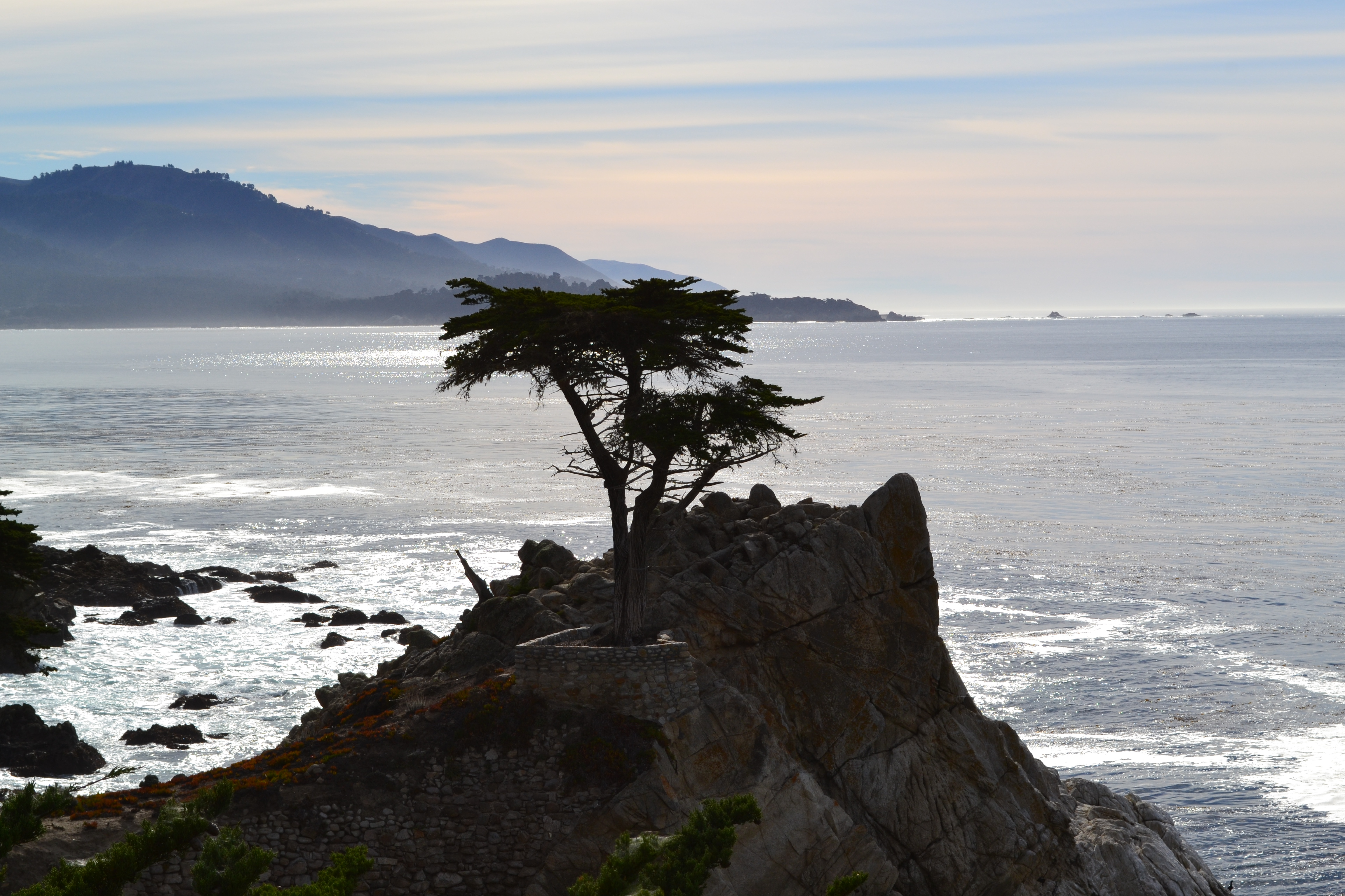 """The infamous """"Lone Cypress"""" Carmel by the Sea"""